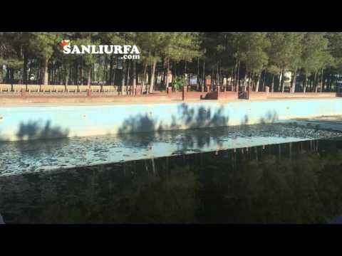 Siverek'teki Havuz Çürümeye Terk Edildi