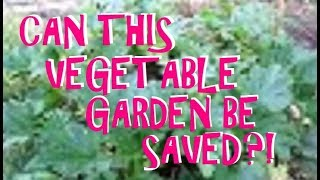 SUBURBAN HOMESTEAD VEGETABLE GARDEN UPDATE ~ HELP THIS DUMPSTER DIVER ~ CAN THIS GARDEN BE SAVED?! thumbnail