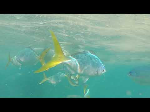 Beautiful fish on Whitsunday sailing trip