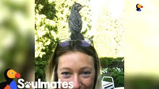 Woman Rescues A Baby Robin And Becomes His Best Friend | The Dodo Soulmates