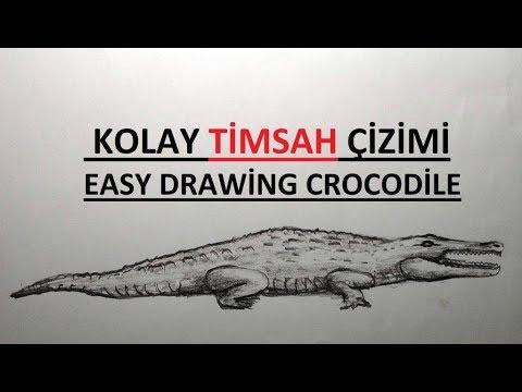 Timsah Cizimi Kolay Timsah Nasil Cizilir Karakalem Drawing