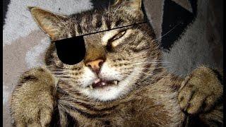 Кошки разбойники 3 эпизод.  Том и Джерри существуют