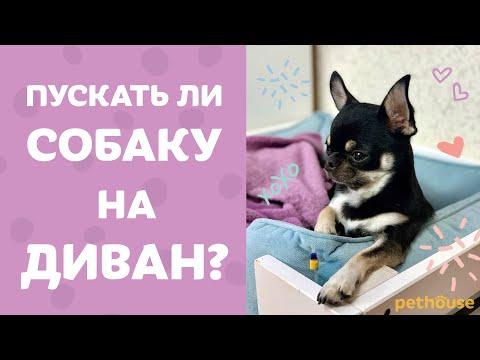 Вопрос: Можно позволить маленькой собачке спать в хозяйской кровати Почему?