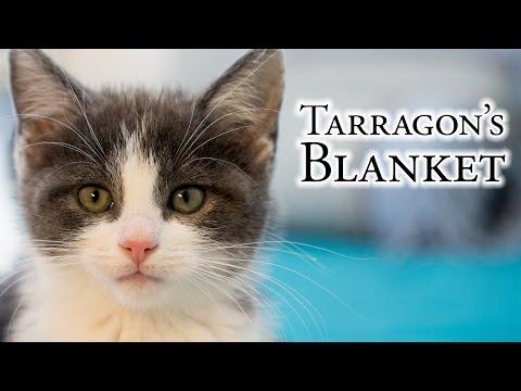 Tarragon's Blanket
