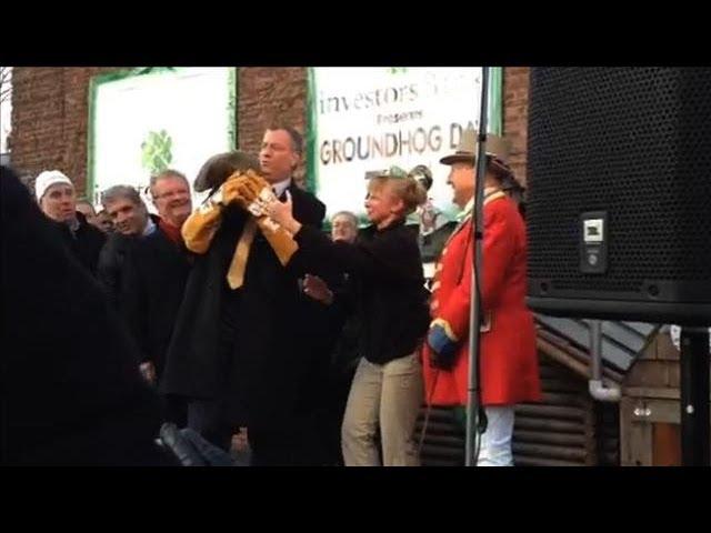 Did the Mayor Kill A Groundhog?