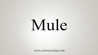How To Say Mule