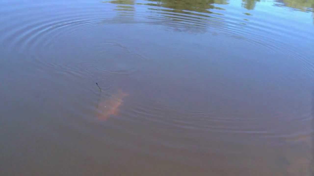 Fischen am chromwerk teich mit mani und tom youtube for Teich mit fischen
