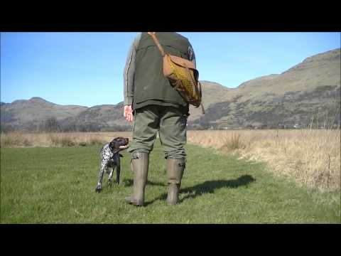 Gundog training, a GSP puppy at 10 month