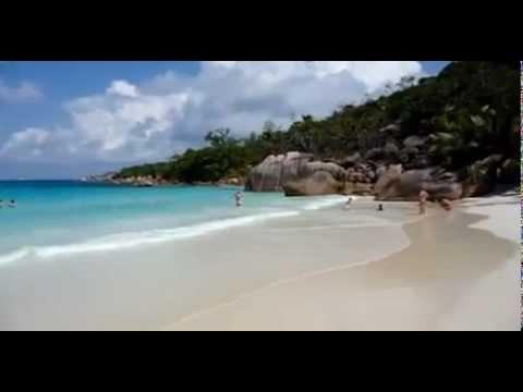 British honeymooners shark attack
