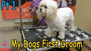 Grooming a young dog for the first time