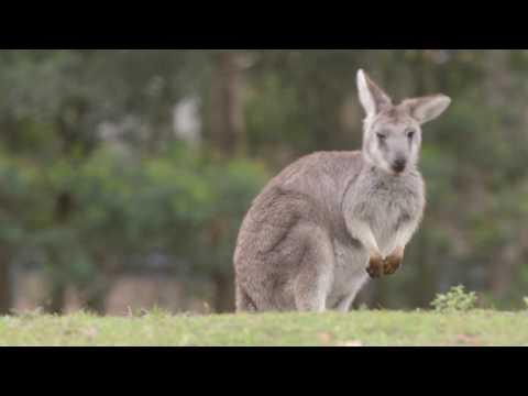 Visit Kangaroo Valley 2017 - kangaroo-valley