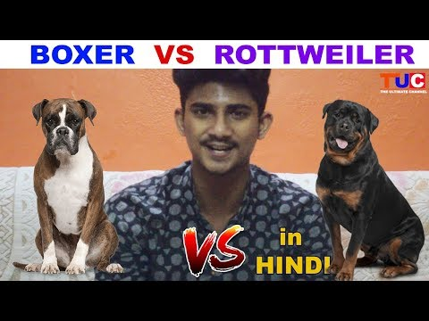 Boxer VS Rottweiler In Hindi : Dog Vs Dog : TUC : The Ultimate Channel