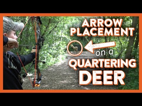 Arrow Placement On Quartering Deer Youtube