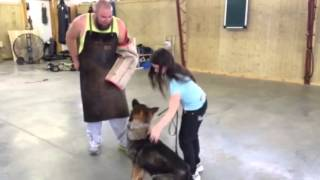 """Dogs And Kids """"enzo"""" Protection Obedience Trainined German Shepherd For Sale"""