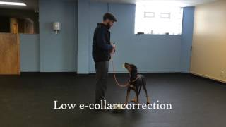 Food Aggression Rehab | K9 Connection Dog Training