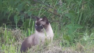 Любопытная кошка Алекса гуляет на природе и охотится/Alex's Curious Cat walks and nature hunts