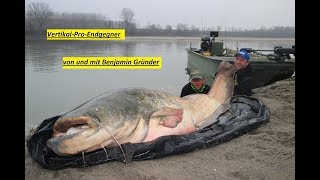Gigant/Monster/Record/Catfish-Vertikal mit 268