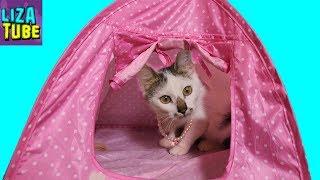 Кошечка Карамелька Будут ли котята у нашей кошки? Где наши котики Кожик и Компот? My Cats show
