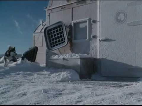 Antartica Prisonniers du froid - Je reviendrais toujours vers toi poster