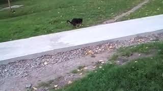 Собаку взял запор😹😹😹