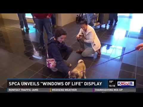 Houston SPCA unveils annual 'Windows of Life' display