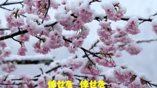 花冷え/里見浩太郎です。
