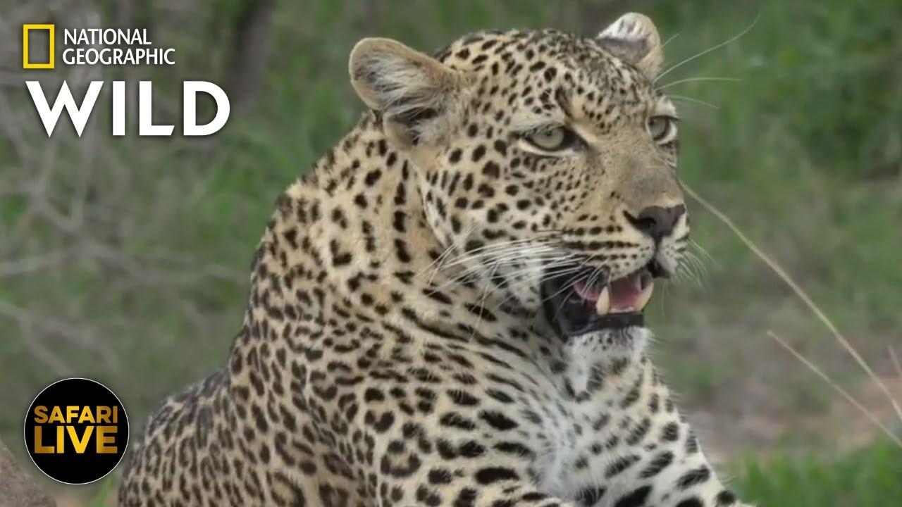Safari Live - Day 291 | Nat Geo Wild