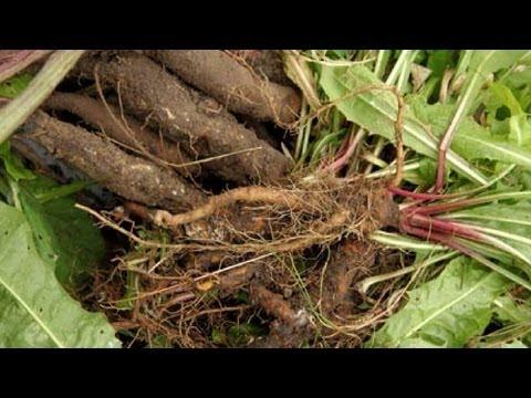 лечение кисты печени народными средствами и травами