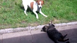 Funny moments with cats and dogs. Приколы с кошками и собаками.