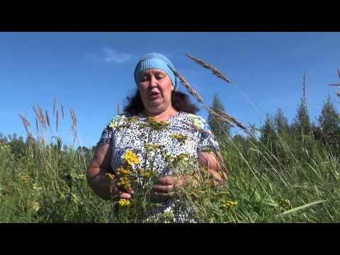Какие травы помогают от глистов какие травы помогут