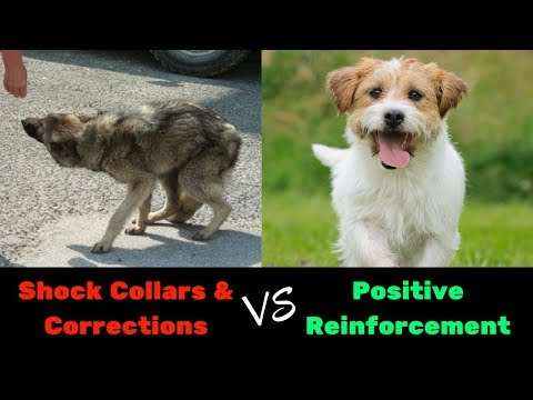 Dog Training: Positive Reinforcement Beats Shock Collars / E-Collars EVERY Time! FACT!