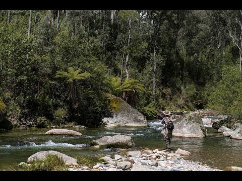 Fly Fishing In The Kiewa River, North East Victoria