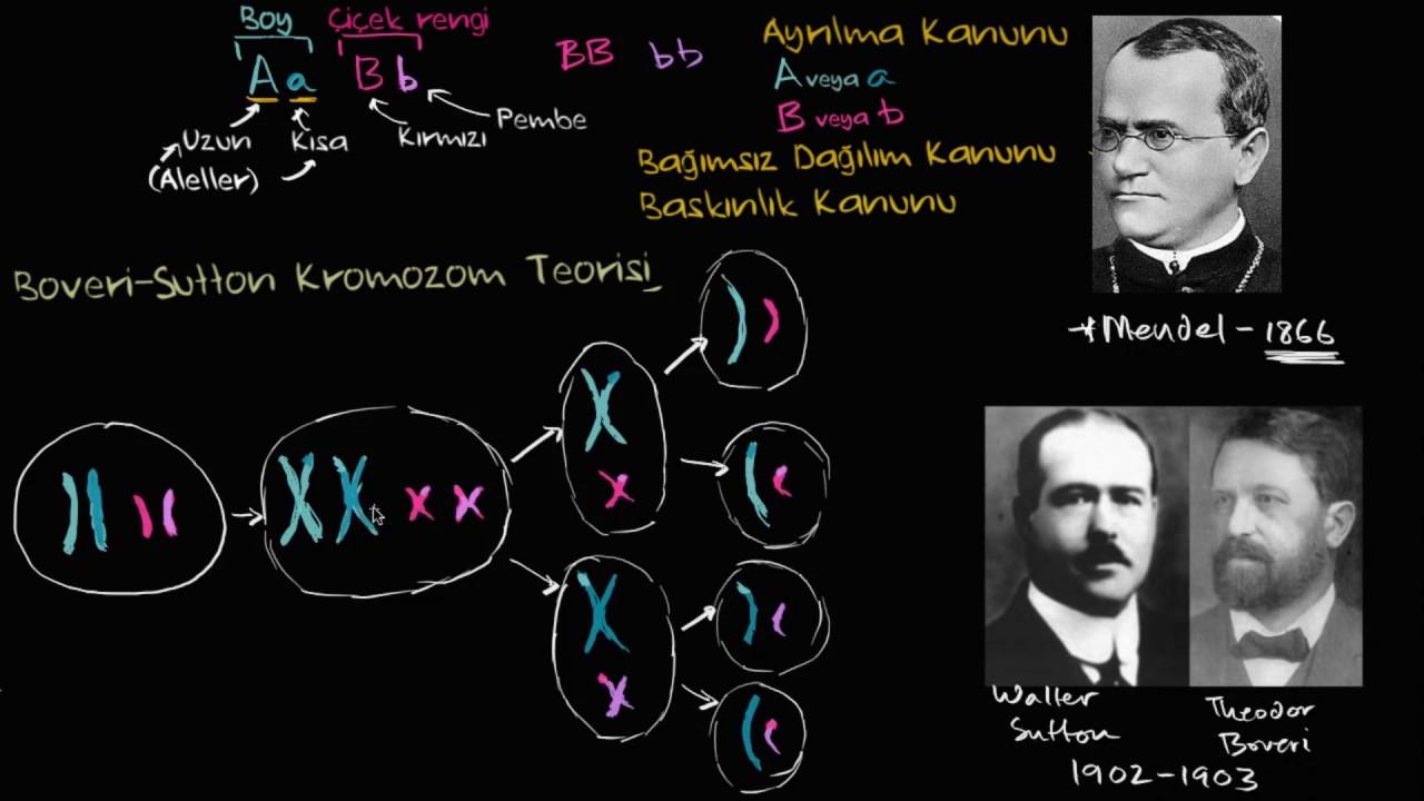 Kalıtım kromozom teorisi