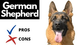 German Shepherd Pros And Cons | The Good AND The Bad