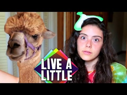 Candace Makes Friends With Animals | Live A Little