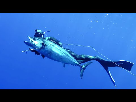 DOGTOOTH TUNA Spearfishing