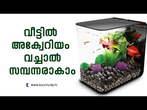 Become Rich By Setting Up Aquarium | Feng Shui | Ladies Hour