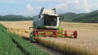 大迫力 大型コンバインによる麦の小麦の収穫です。