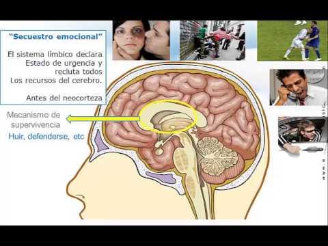 Cdl Conocimiento General, Cdl Test Español, de YouTube · Duração:  7 minutos 41 segundos