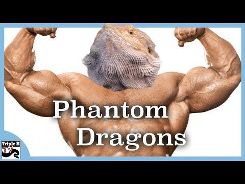 Breeding For STRENGTH!!  Phantom Dragons - Triple B TV Ep.163