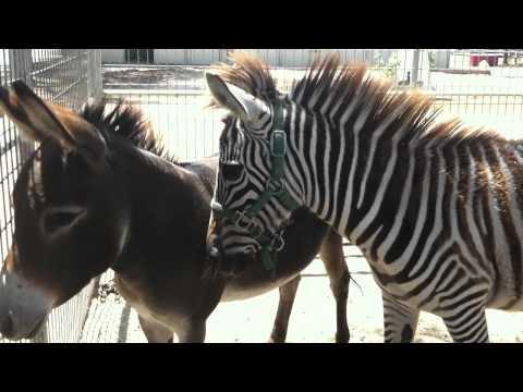 Zebra Noise - YouTube