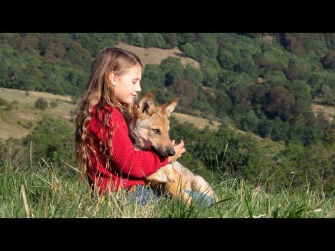 Мой волк 🥺 Русский трейлер к фильму 2021 🥺