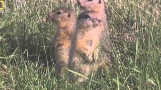 Природа России Сибирь Документальные фильмы National Geographic2015