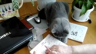 Кот разгадывет кроссворд
