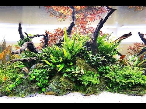 Aquascaper 600 Nature Aquarium - Full maintenance session