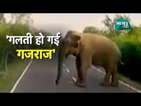 हाथी से मजाक करोगे तो ये होगा, देखें LIVE वीडियो | YRAL | News Tak