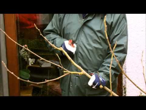 Handige tips en info voor het planten van rozen from YouTube · Duration:  1 minutes 44 seconds