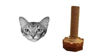 Kediniz İçin Kolay Tırmalama Tahtası Nasıl Yaparsınız?