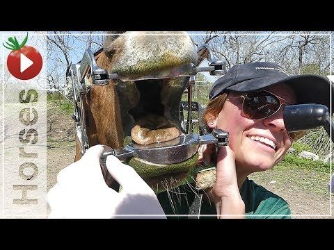 HORSE TEETH - Equine Dentistry and Vaccines - The Horse Veterinarian Visits