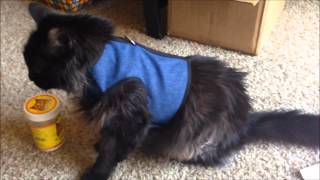 The Kitty Holster harness